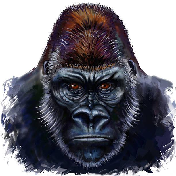 ilustraciones, imágenes clip art, dibujos animados e iconos de stock de gorila macho - gorila