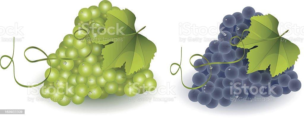 Grape royalty-free stock vector art