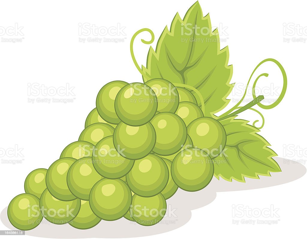 Grape vector illustration vector art illustration