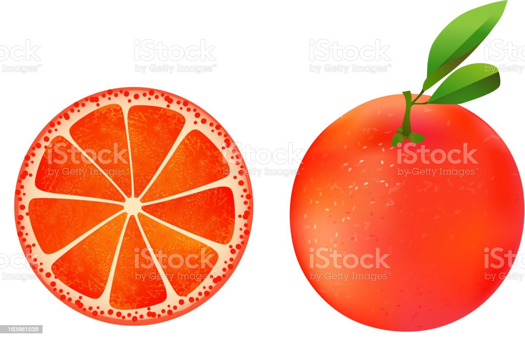Grapefruit illustration royalty-free stock vector art