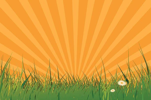Grass field against rising sun vector art illustration