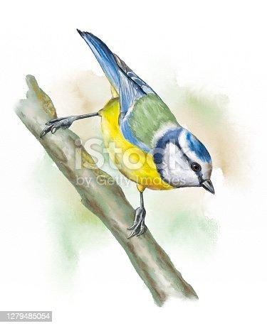 istock Grassland birds, blue tit 1279485054