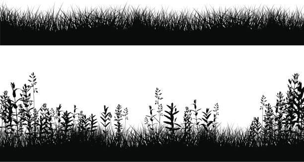 illustrations, cliparts, dessins animés et icônes de silhouettes champ vert frontière - plante sauvage