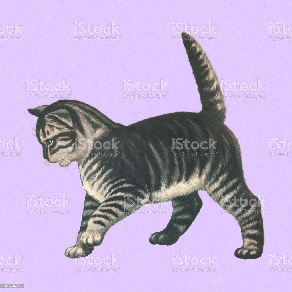 Gray Cat royalty-free stock vector art
