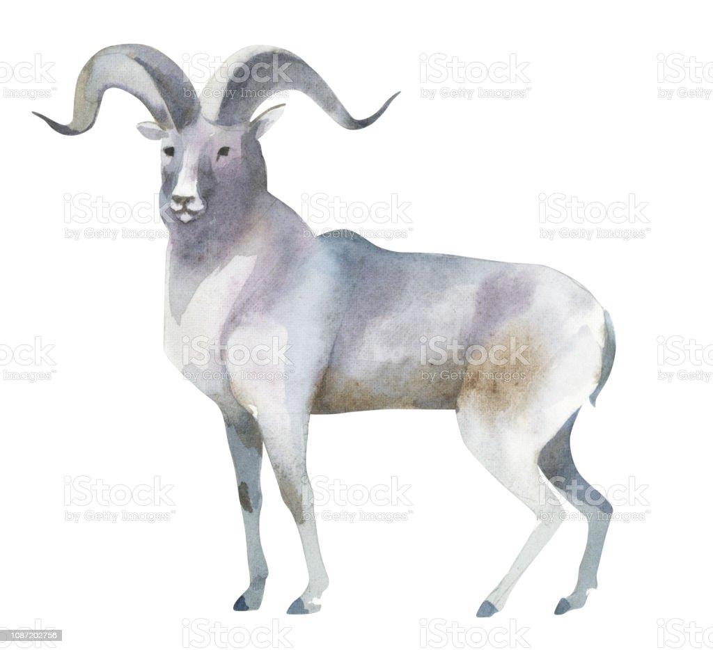 Un mouton gris de la montagne se dresse. Éclaboussures de croquis d'animaux de forêt sauvage du Nord un mouton gris de la montagne se dresse éclaboussures de croquis danimaux de forêt sauvage du nord vecteurs libres de droits et plus d'images vectorielles de affiche libre de droits