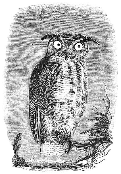 great horned owl - great horned owl stock illustrations, clip art, cartoons, & icons
