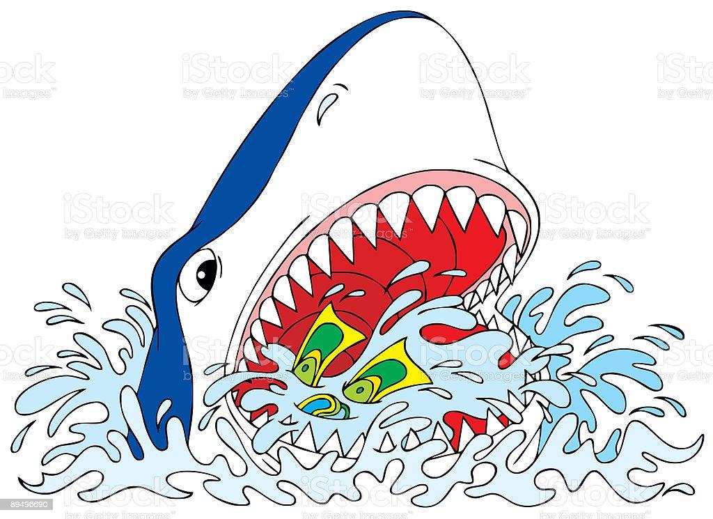 Grande squalo bianco grande squalo bianco - immagini vettoriali stock e altre immagini di acqua royalty-free