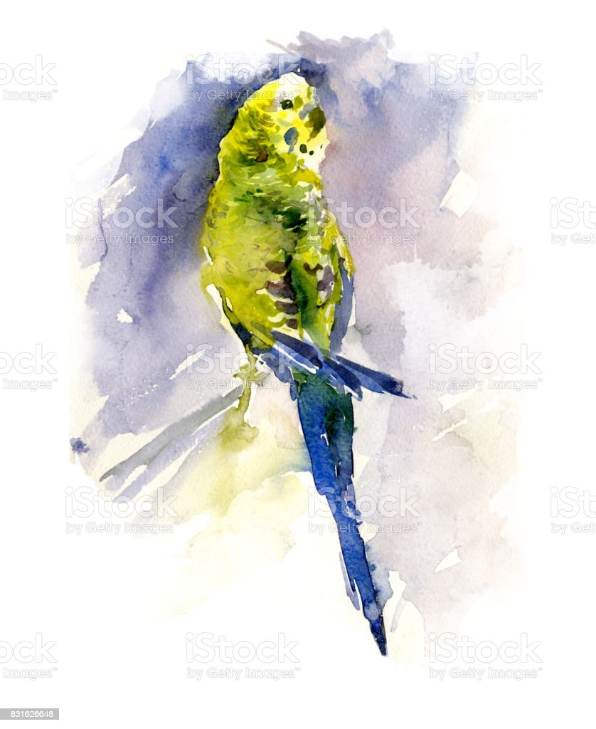 Green and yellow parrot on blue background. Watercolor painting, hand drawn. vector art illustration