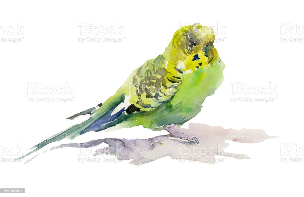 Green and yellow parrot on white background. Watercolor painting. vector art illustration