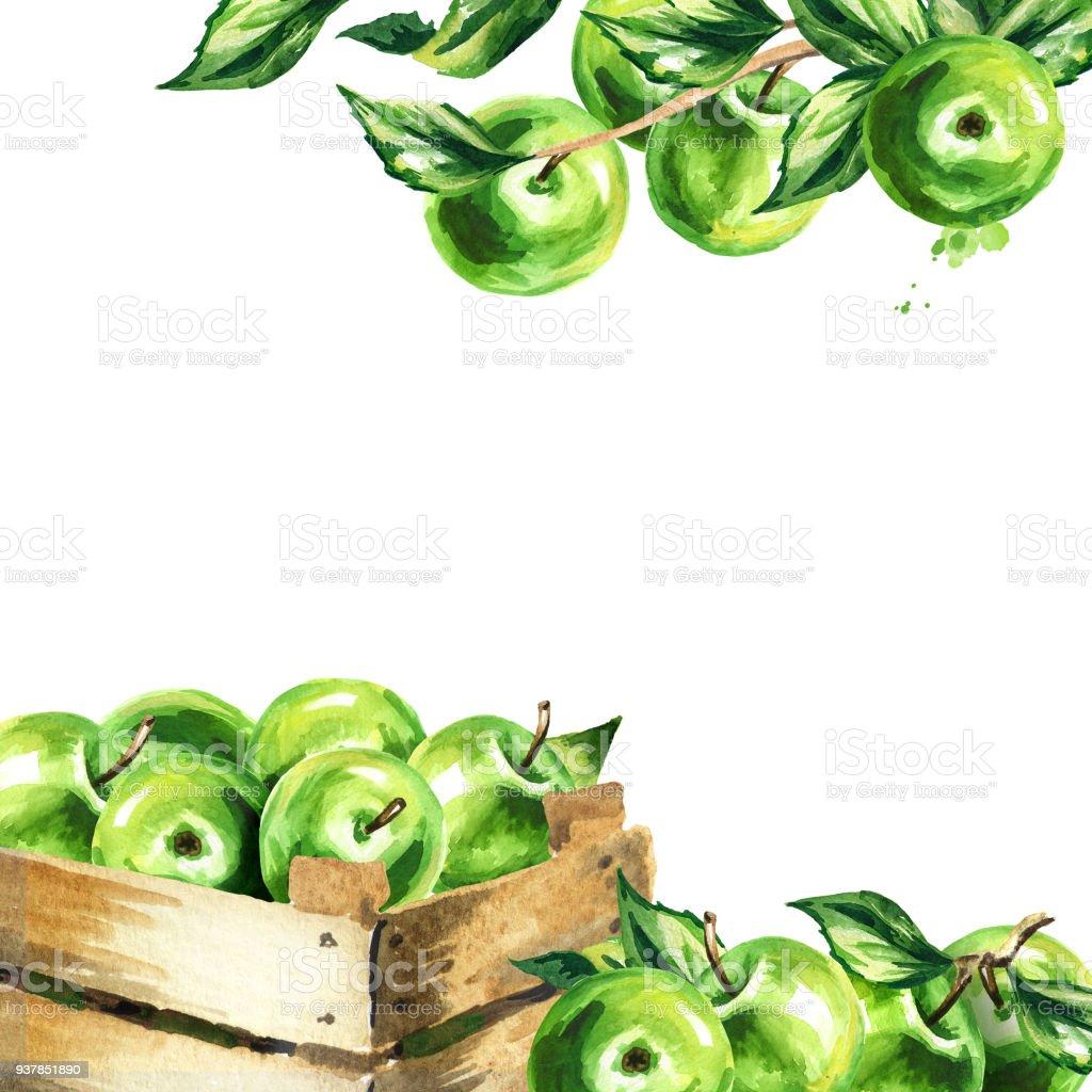 Grüne Äpfel Und Blätter Quadratischen Hintergrund Aquarell Hand ...