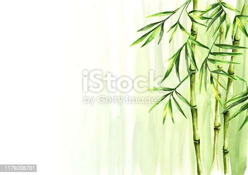 istock Green bamboo background, Asian rainforest. Watercolor hand drawn  isolated illustration 1179205701