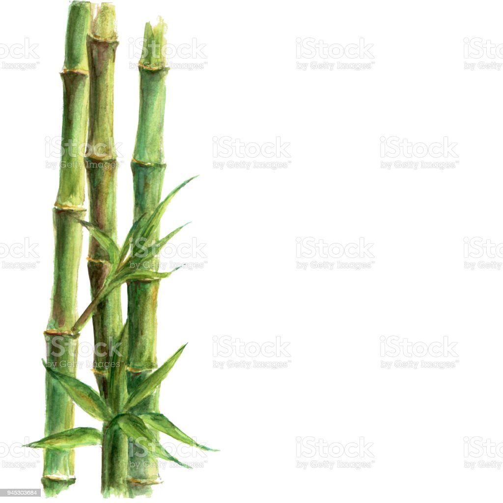 Green bamboo plants isolated on white background vector art illustration