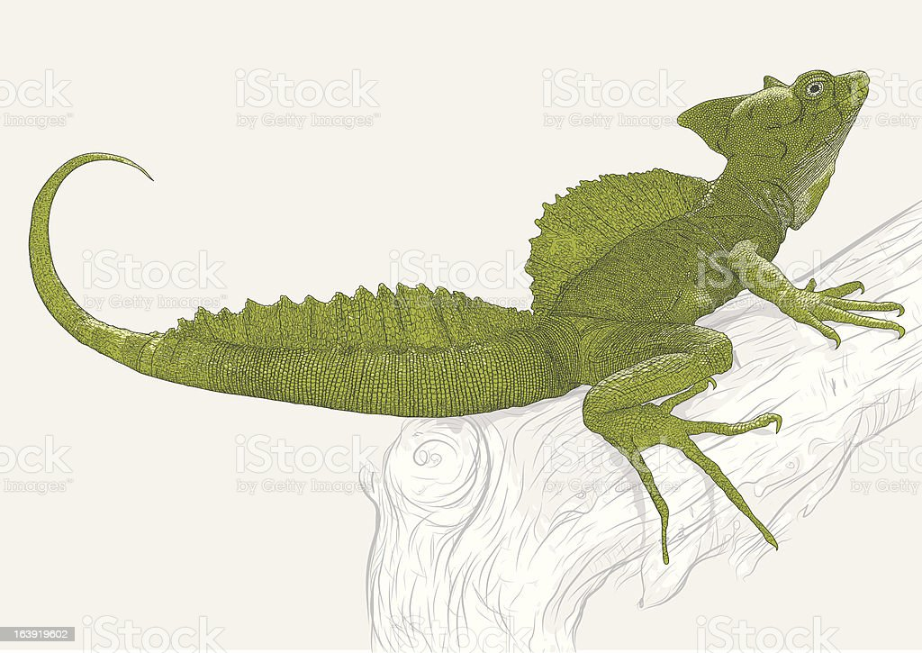 Ilustración de Basilisco Verde y más banco de imágenes de Animal ...