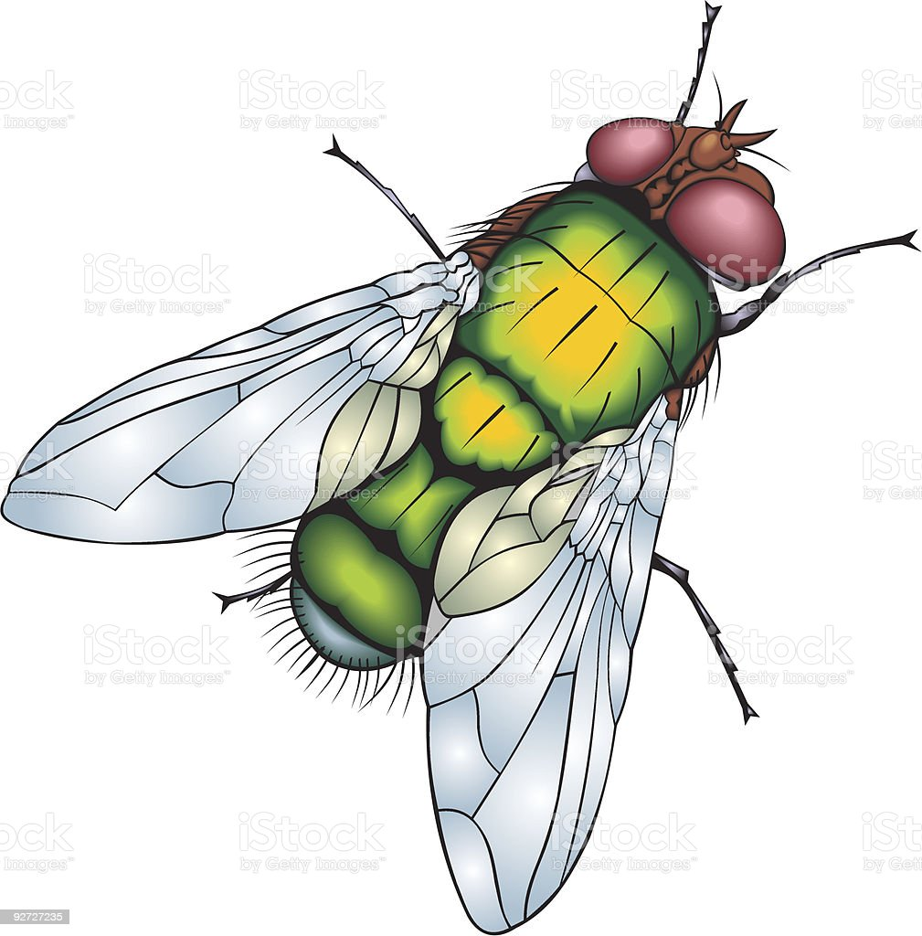 green fly royalty-free stock vector art