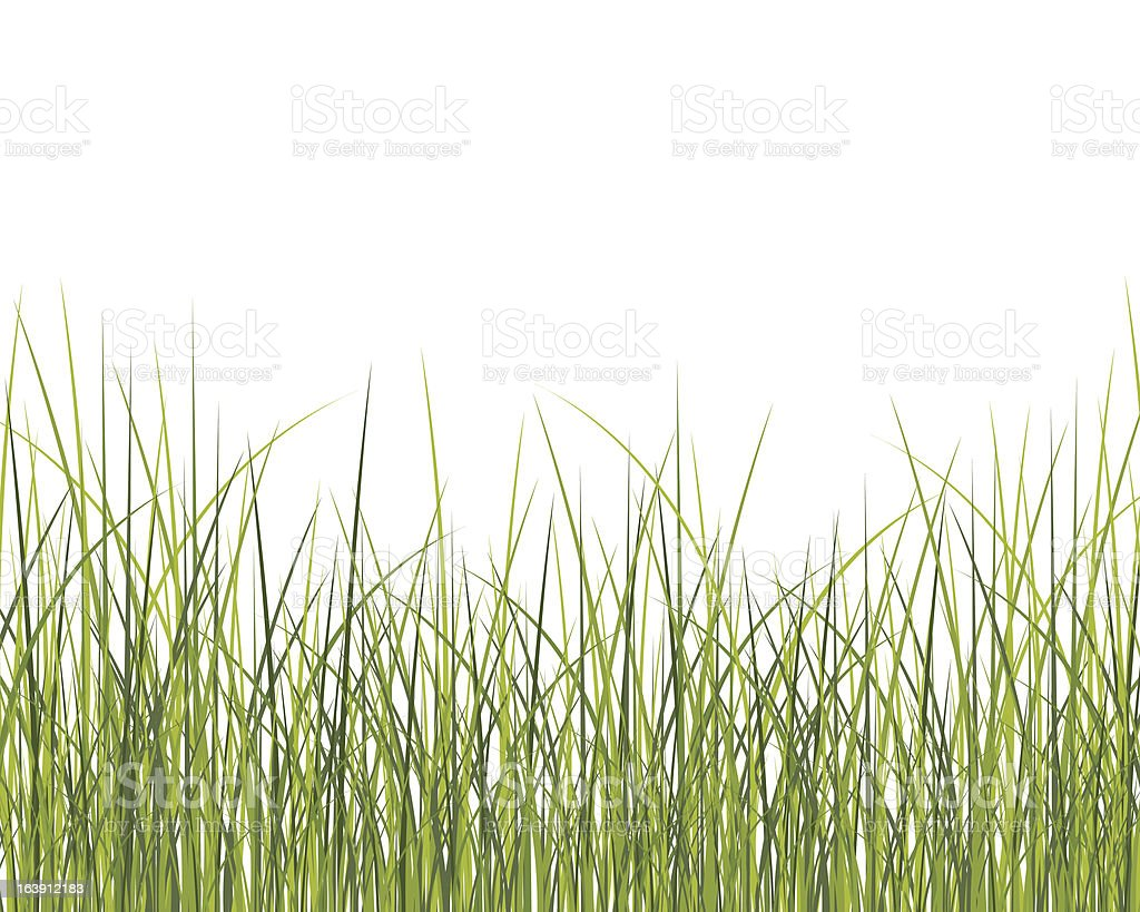 Green grass background vector art illustration