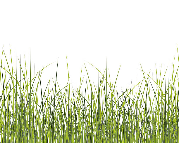 stockillustraties, clipart, cartoons en iconen met green grass background - grasspriet