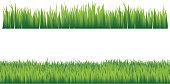 Green grass. Horizontal seamless