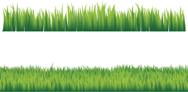 stockillustraties, clipart, cartoons en iconen met green grass - grasspriet