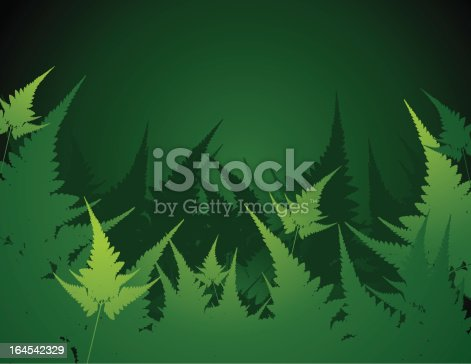 vector of green fern leaf background