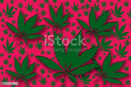Illustration with cannabis leaves. Cannabis sativa. Foliage