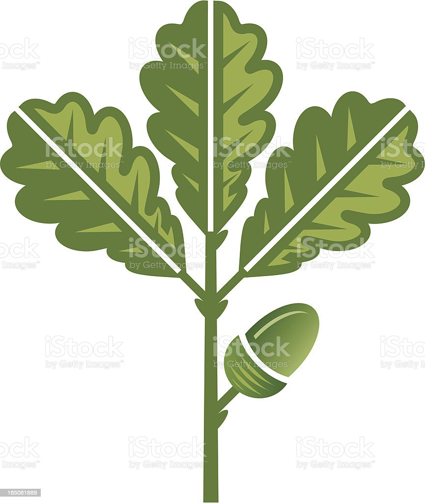 Green oak leaf and acorn royalty-free stock vector art