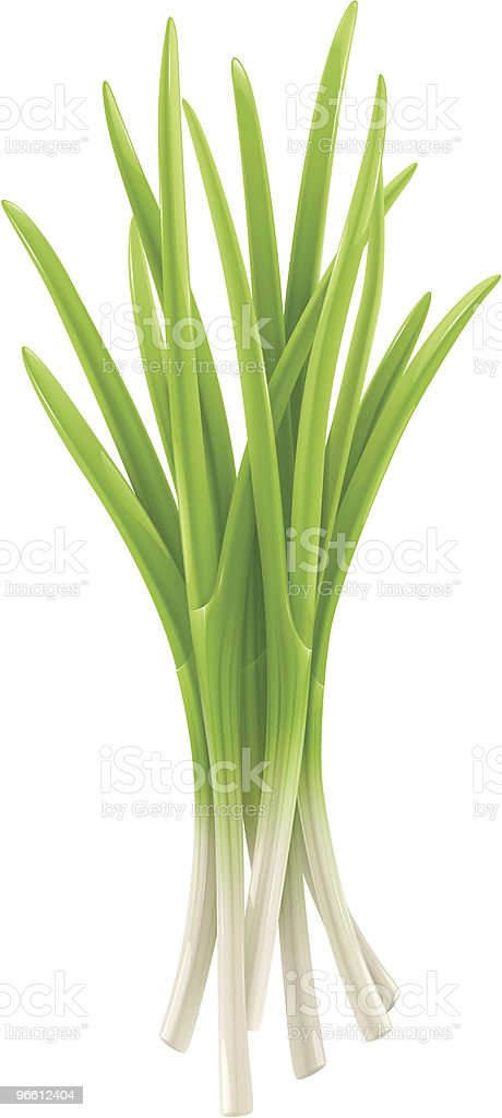 Green onion - Royalty-free Close-up stock vector