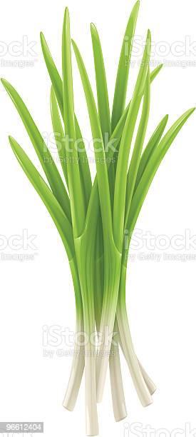 Green Onion-vektorgrafik och fler bilder på Beskrivande färg
