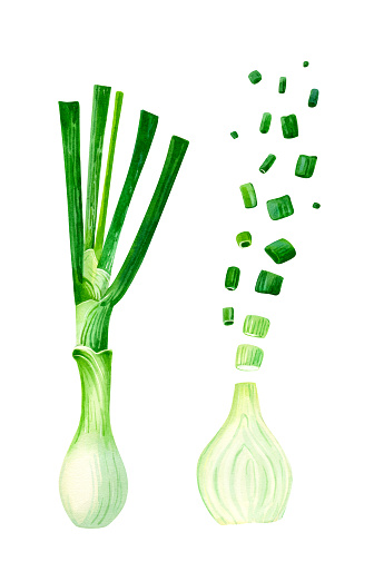 Green Onions Whole And Cut Isolated On White Watercolor Illustration Stock Illustration - Download Image Now