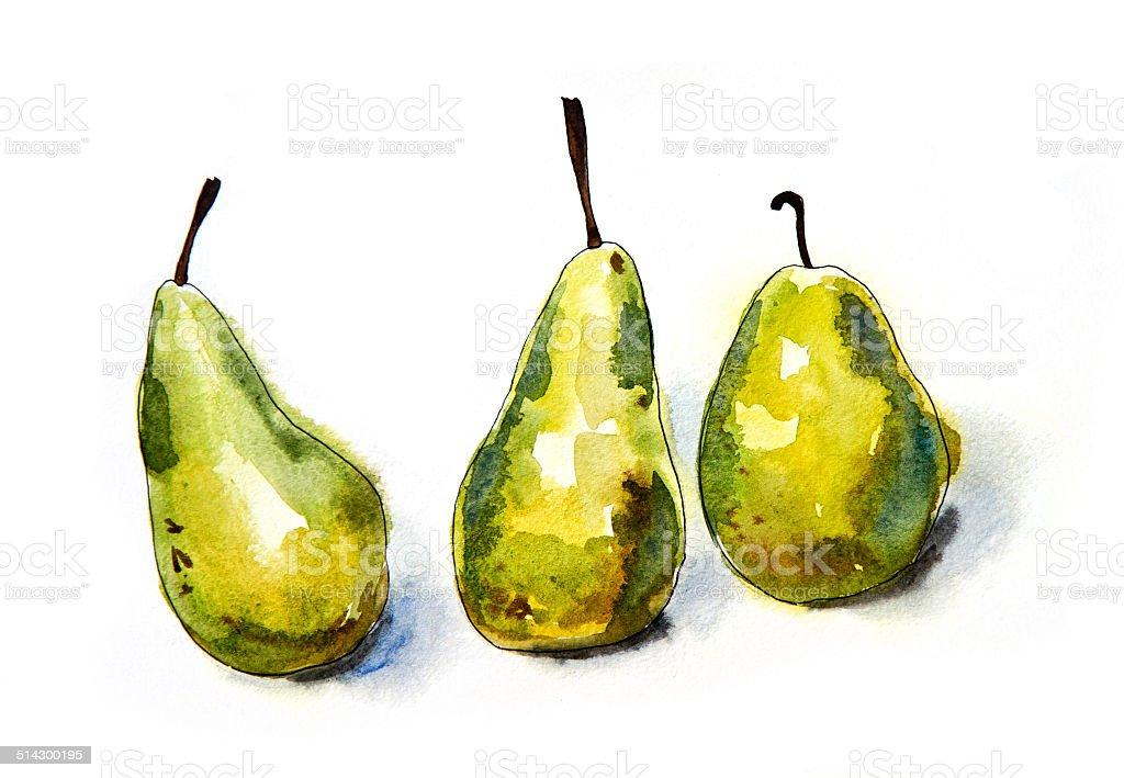 Green Pears - Original watercolour painting vector art illustration