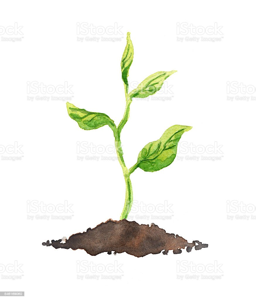 Green plant with leaves growing in soil. Watercolor vector art illustration