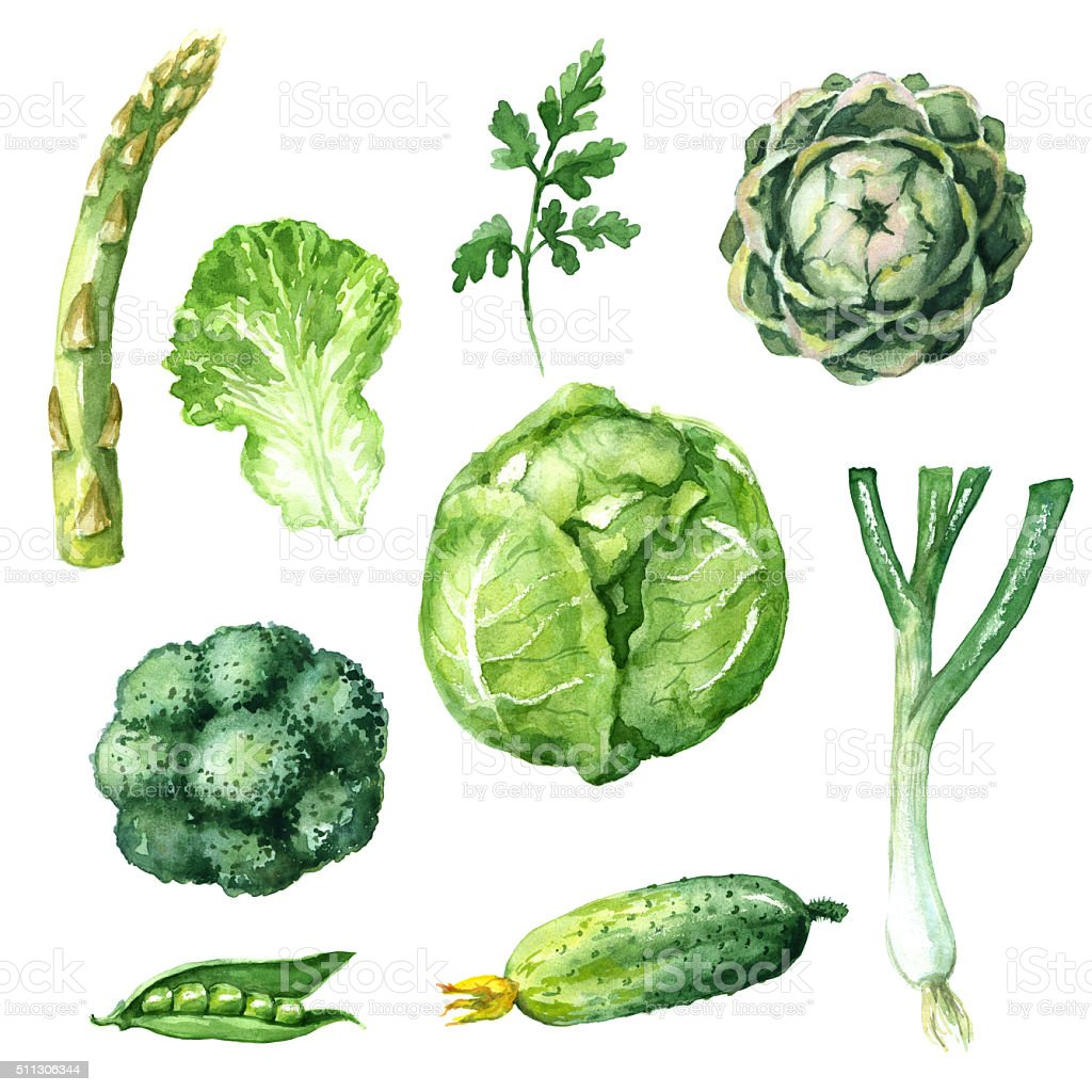 Verde conjunto de legumes - ilustração de arte em vetor