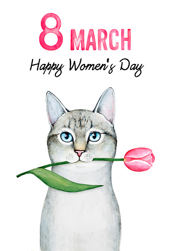 Greeting Card Design For 8 March International Womens Day Stock Illustration Download Image Now Istock