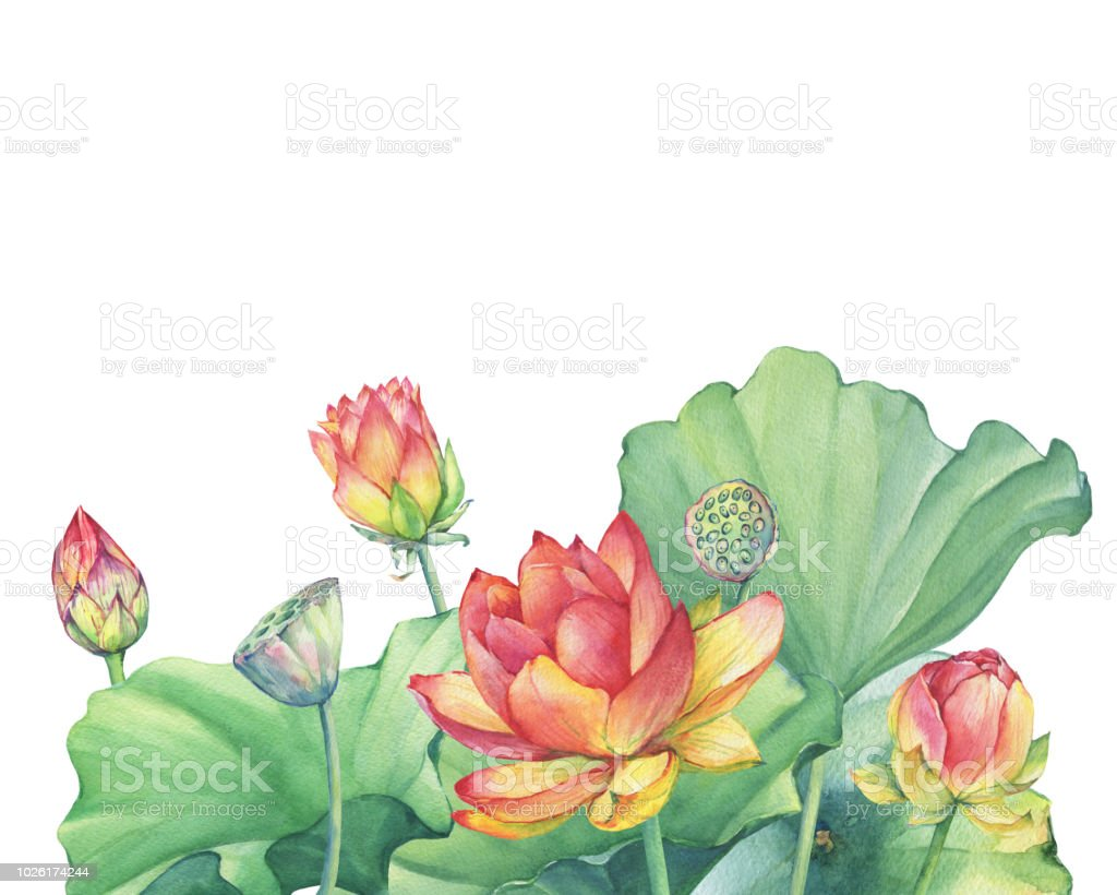 Greeting Card With Pink Lotus Flower With Leaves Seed Head Bud