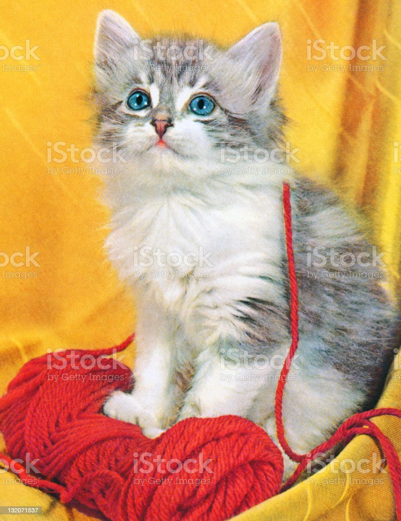 Grey Kitten With Yarn vector art illustration
