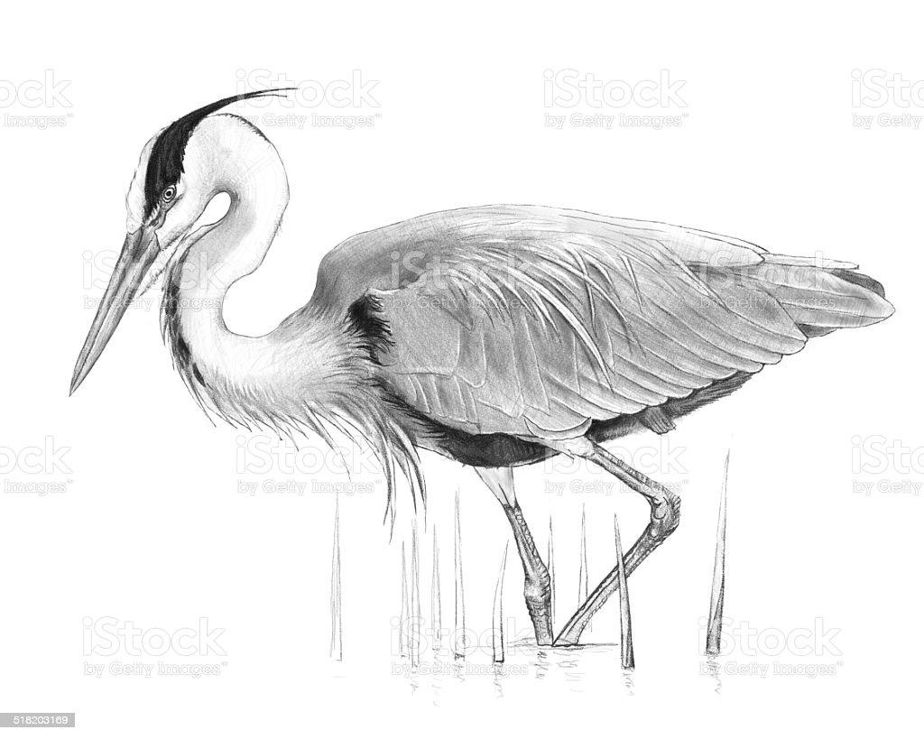 grey pencil drawing vector art illustration