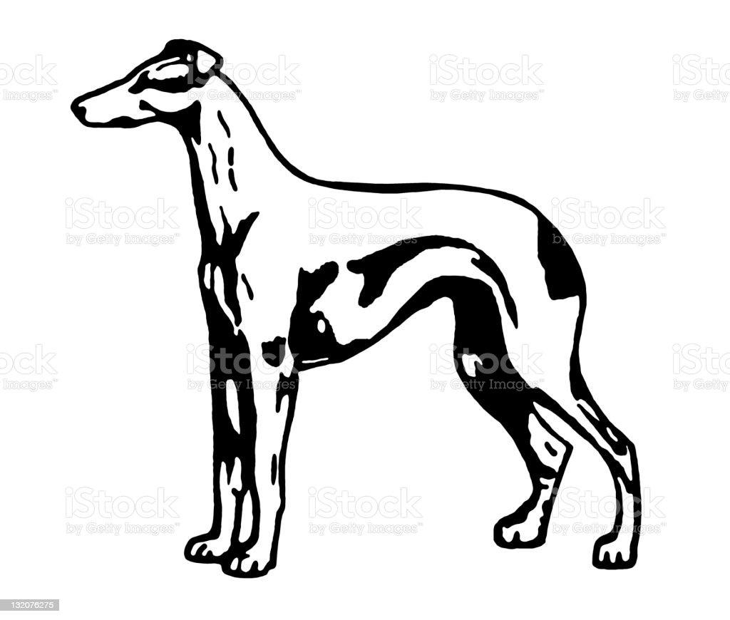 Greyhound Dog vector art illustration