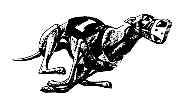 Royalty Free Greyhound Running Clip Art, Vector Images