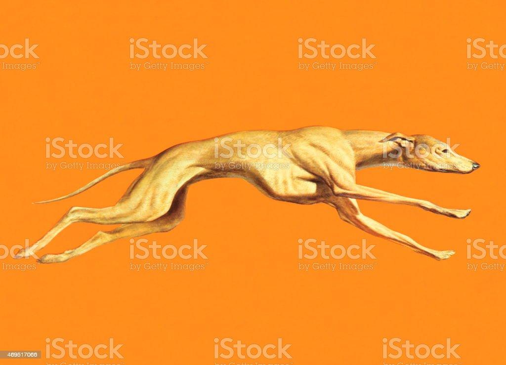 Greyhound Dog Running vector art illustration