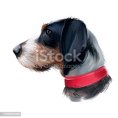 istock Griffon Bleu de Gascogne dog digital art illustration isolated on white background. France origin medium-sized scenthund hunting dog. Pet hand drawn portrait. Graphic clip art design for web, print. 1253830493