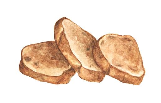 Grilled bread, Sliced bread. Watercolor illustration.