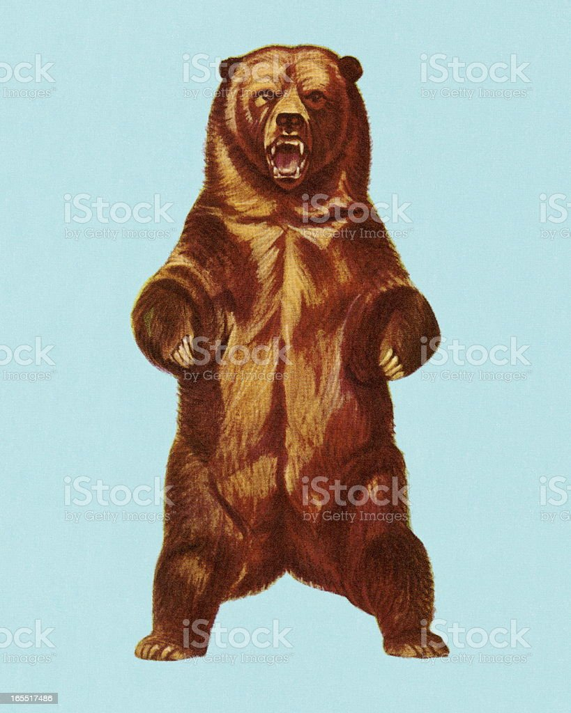 Grizzly - Illustration vectorielle