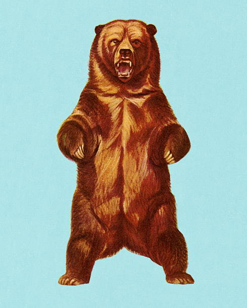 Grizzly Bear vector art illustration
