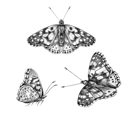 Group butterflies isolated on white background