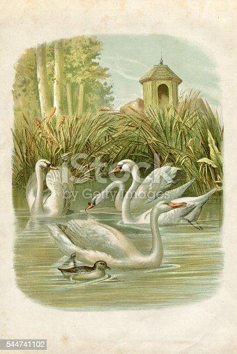 Steel engraving swans on lake