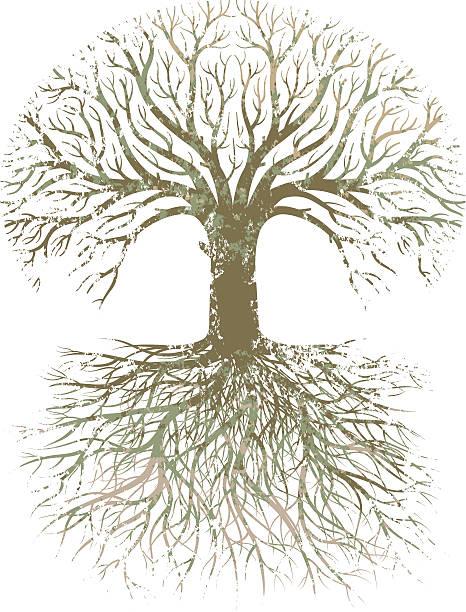 grunge großer baum wurzeln. - stammbäume stock-grafiken, -clipart, -cartoons und -symbole