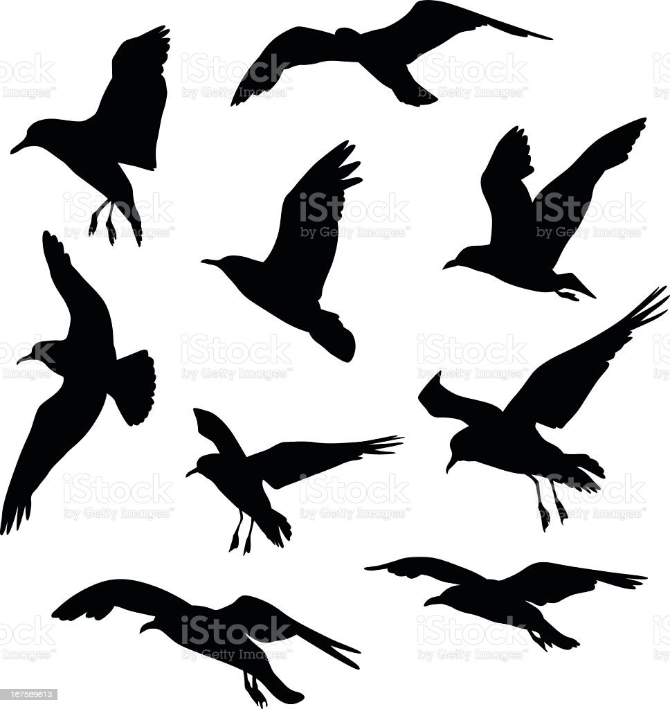 Gulls Vector Silhouette royalty-free stock vector art