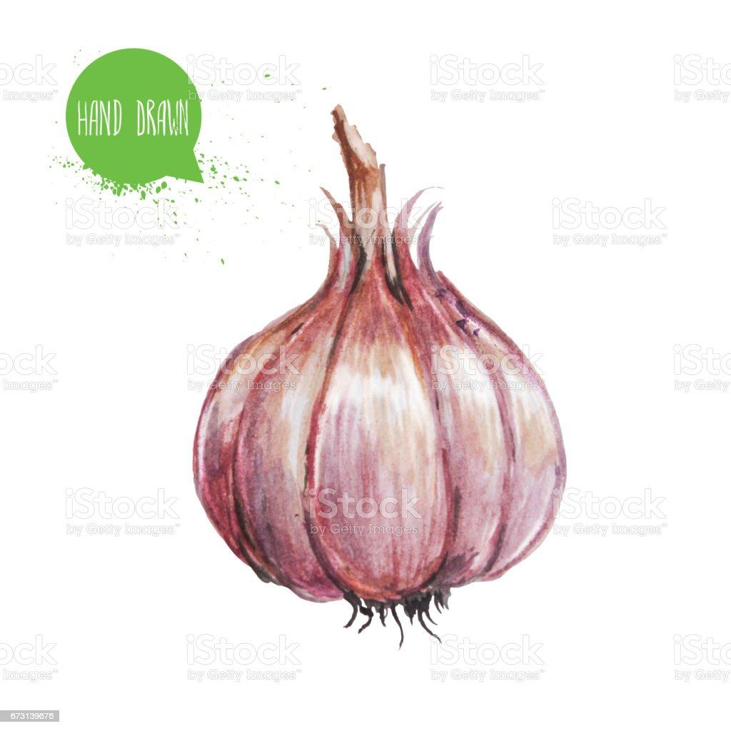 Hand drawn and painted watercolor green garlic. Isolated on white background. Vegetable illustration. - ilustração de arte em vetor