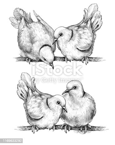 Hand drawn doves couple isolated on white background. Two wild  pigeons sitting on branches  pencil drawing