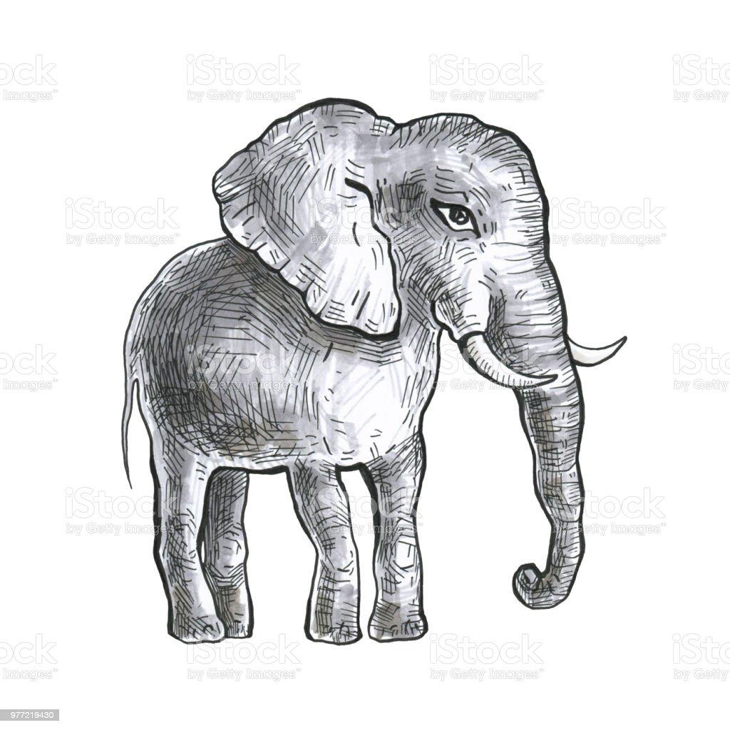 Hand drawn elephant vector art illustration