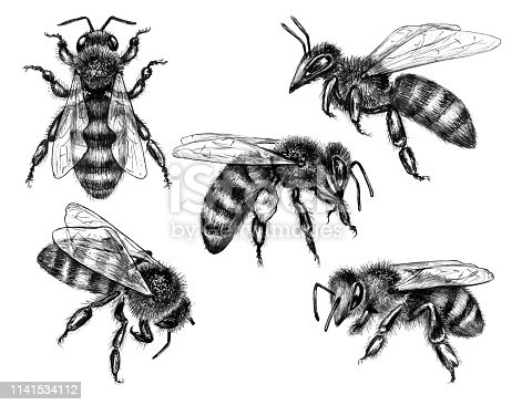 Hand Drawn Flying and Sitting Bees